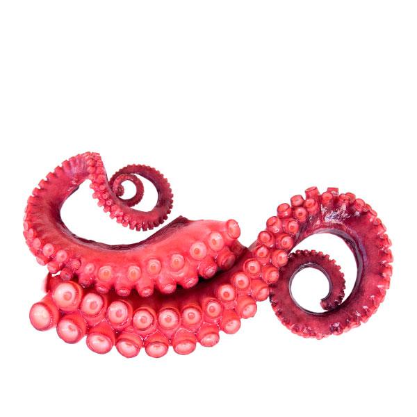 tentaculo pulpo cocido