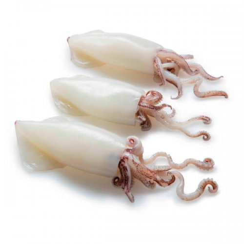 tubos y tentaculos de calamar