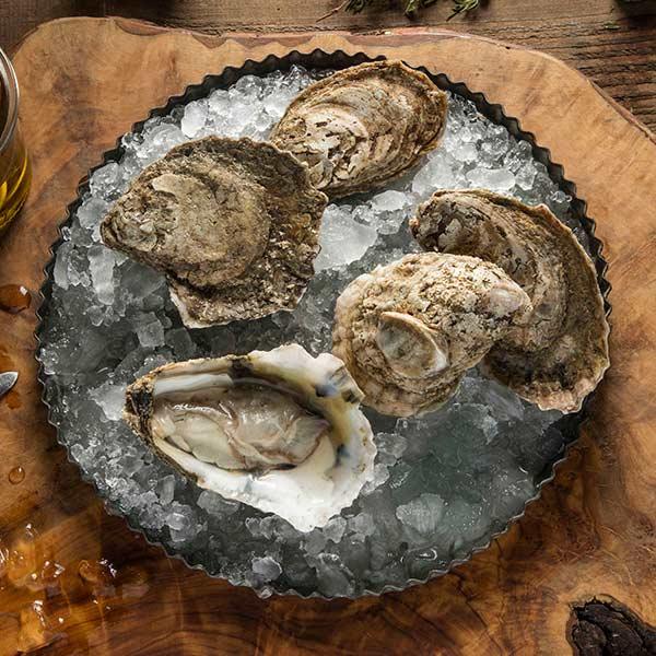 bivalvos y ostras